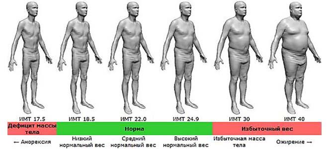Градация индекса массы тела